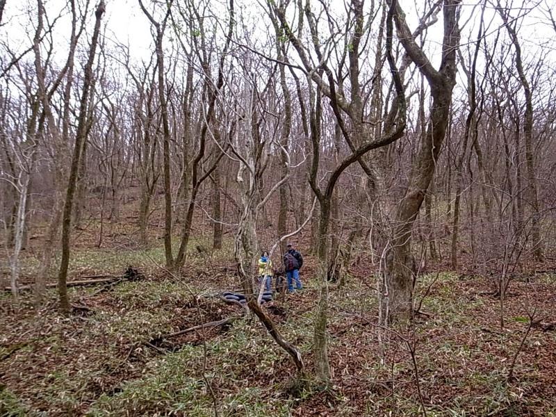 見事なクヌギの森。