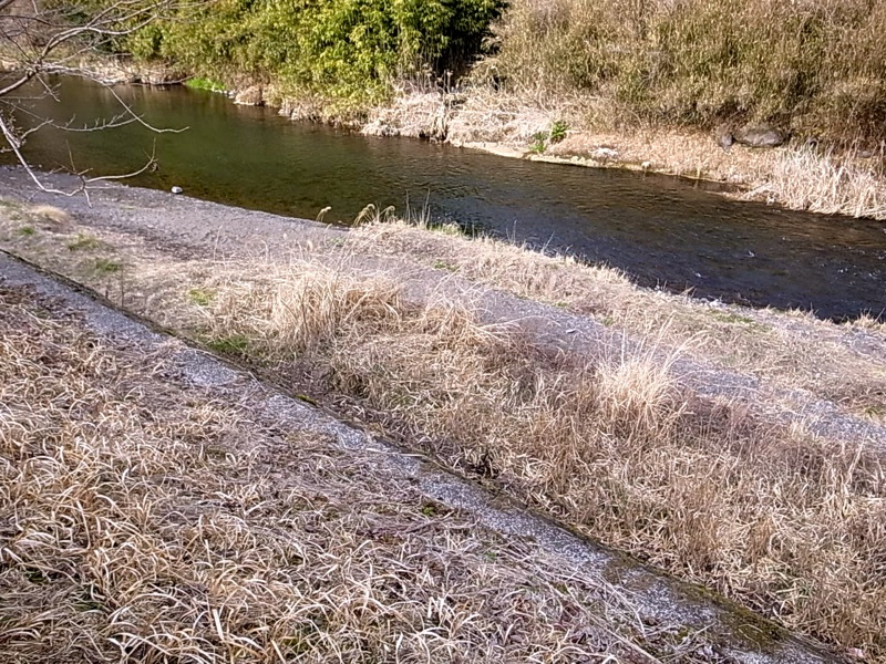 早春のヤマメの川。