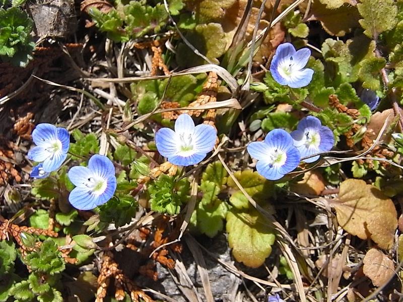 青く小さな花。