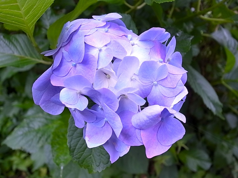 あでやかな花。