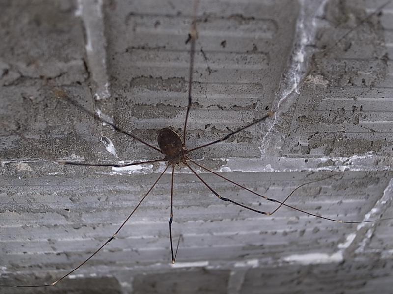 この蜘蛛って。