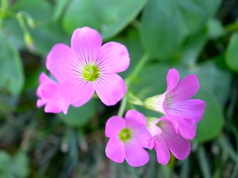 花を見て。