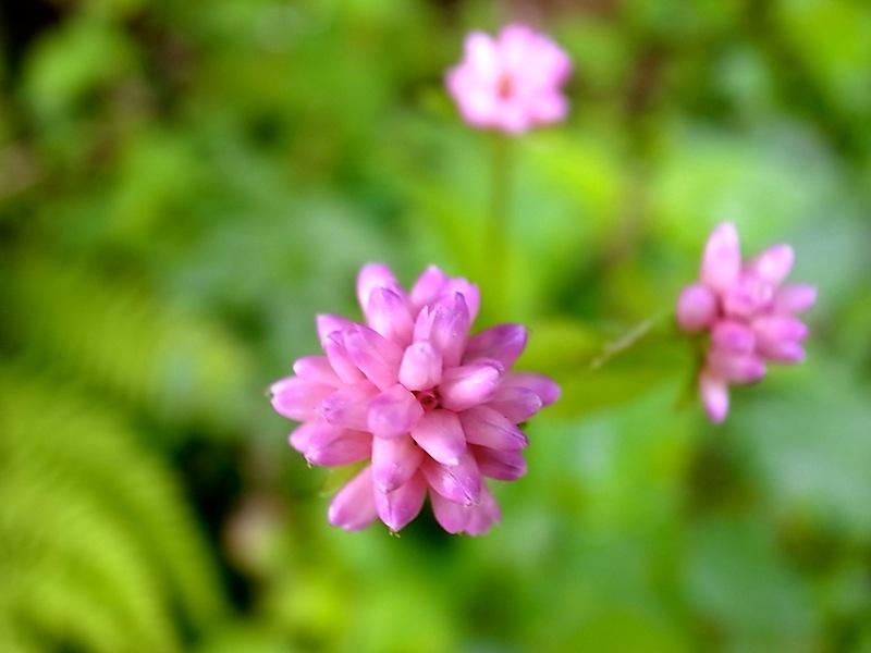 きれいな花。