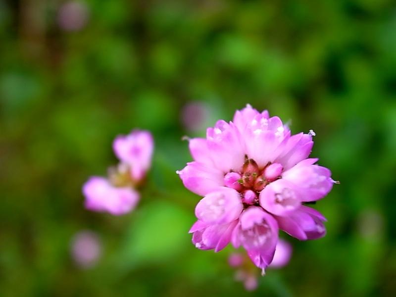 小さな花が。