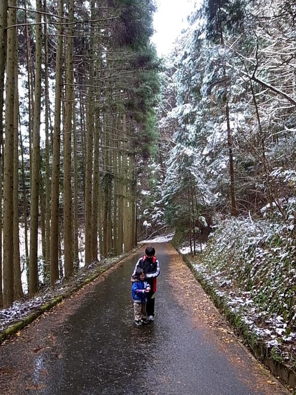 凛とした冬の林道。