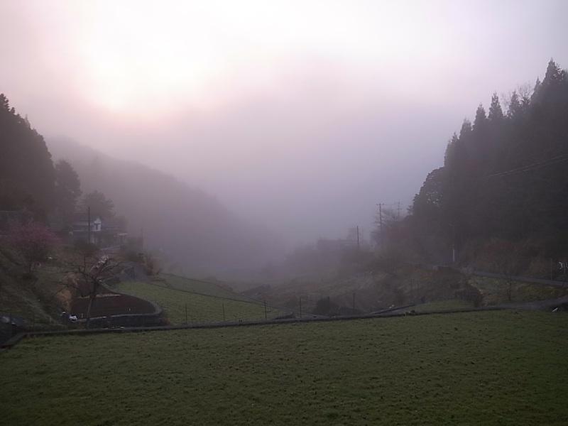 春は朝霧が多い。
