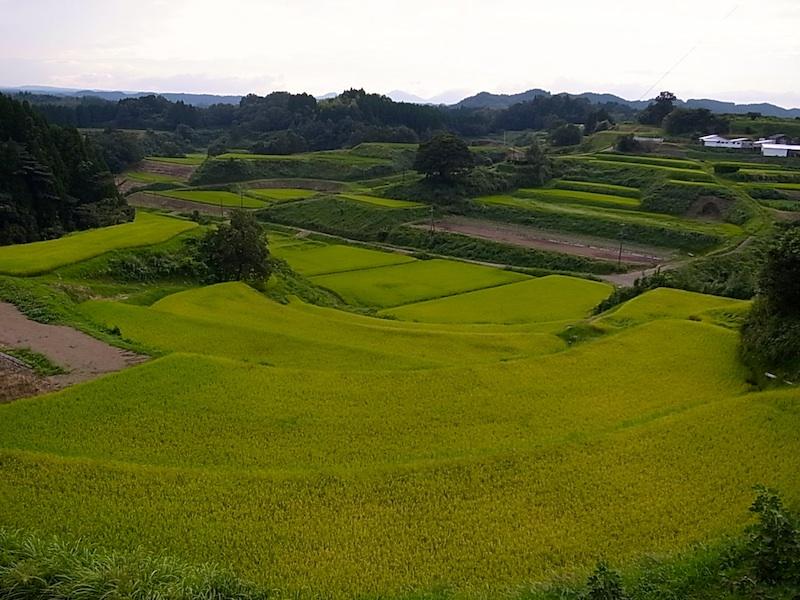 竹田の田圃。