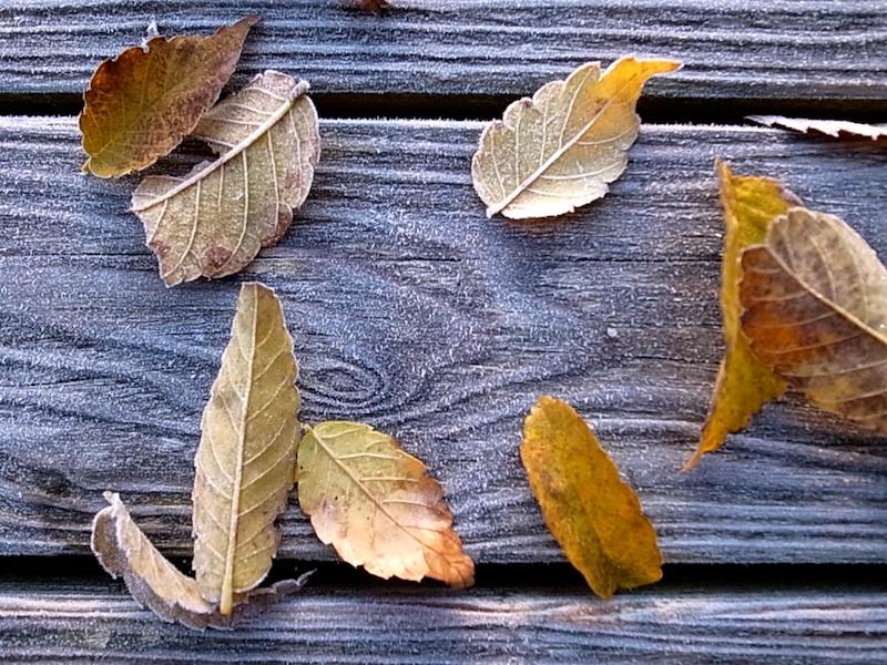 デッキの落ち葉。