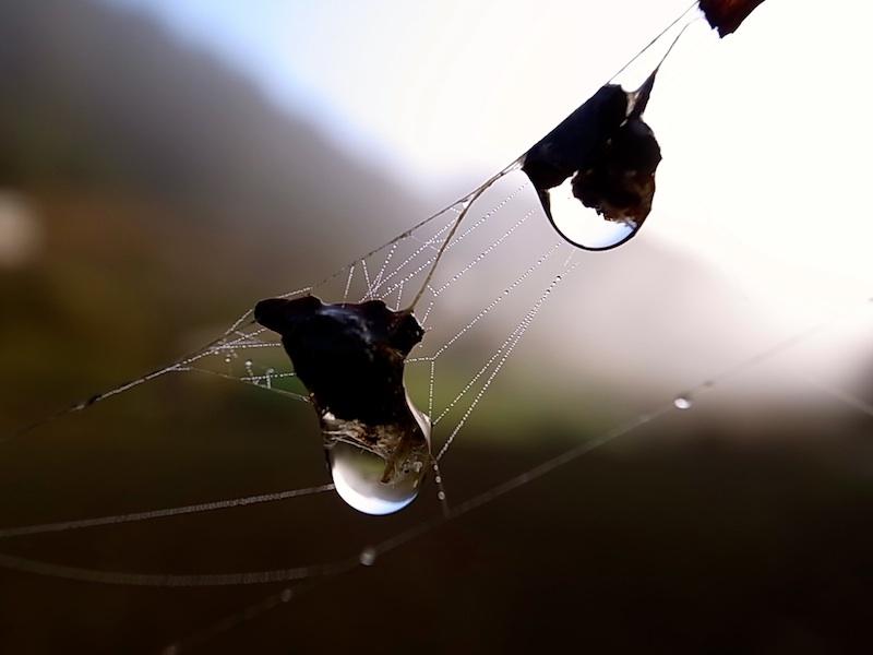 蜘蛛の巣の滴。