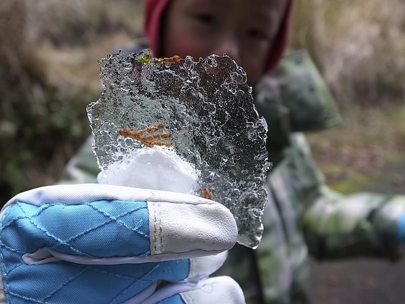 薄氷をみっけ。