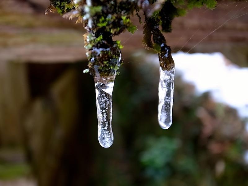 小さな氷柱。