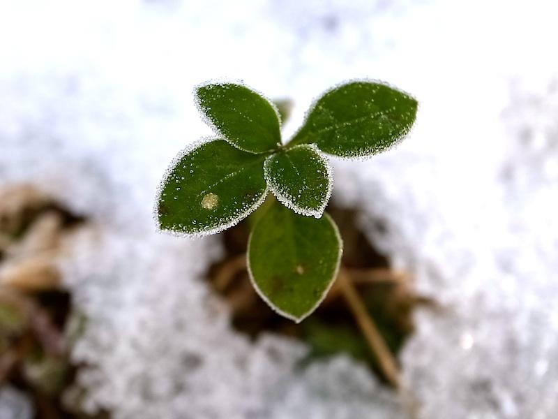 残雪と霜。
