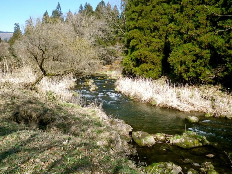 大好きな川。