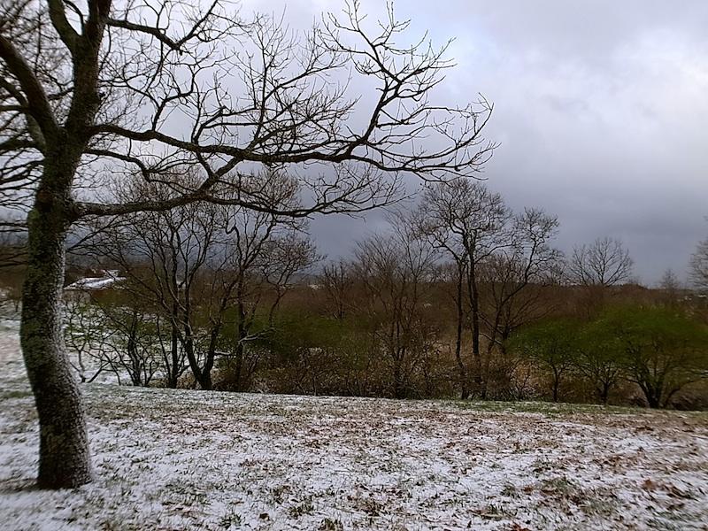 翌朝はよもやの雪。
