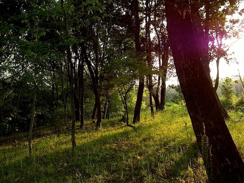 林に差し込む朝陽。