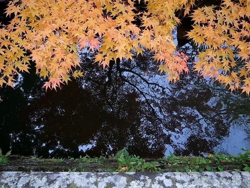 枝葉が映る。