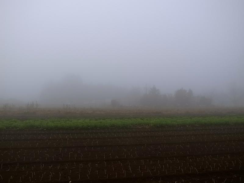 霧を晴らして。