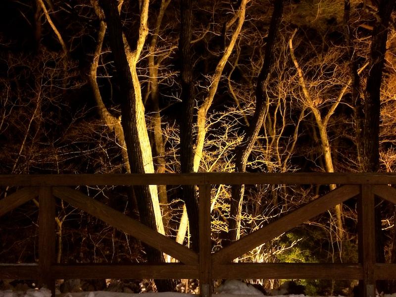 夜景はクヌギ林。