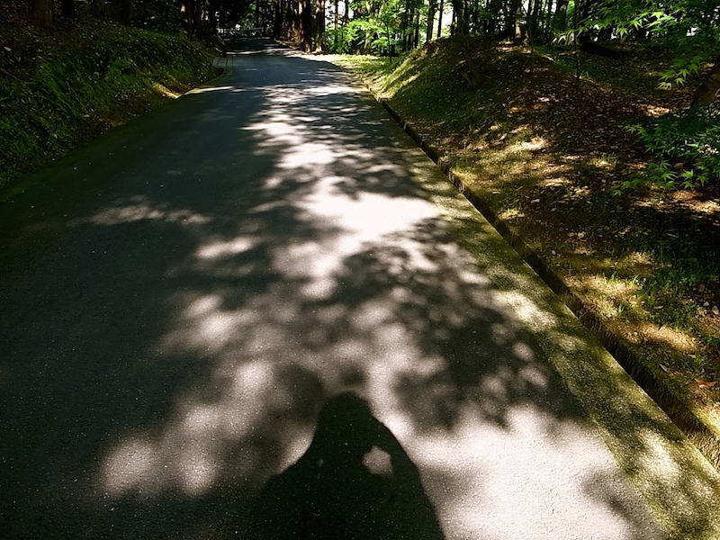 朝の散歩の帰り道。