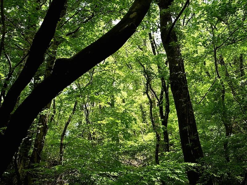 本当の自然林。