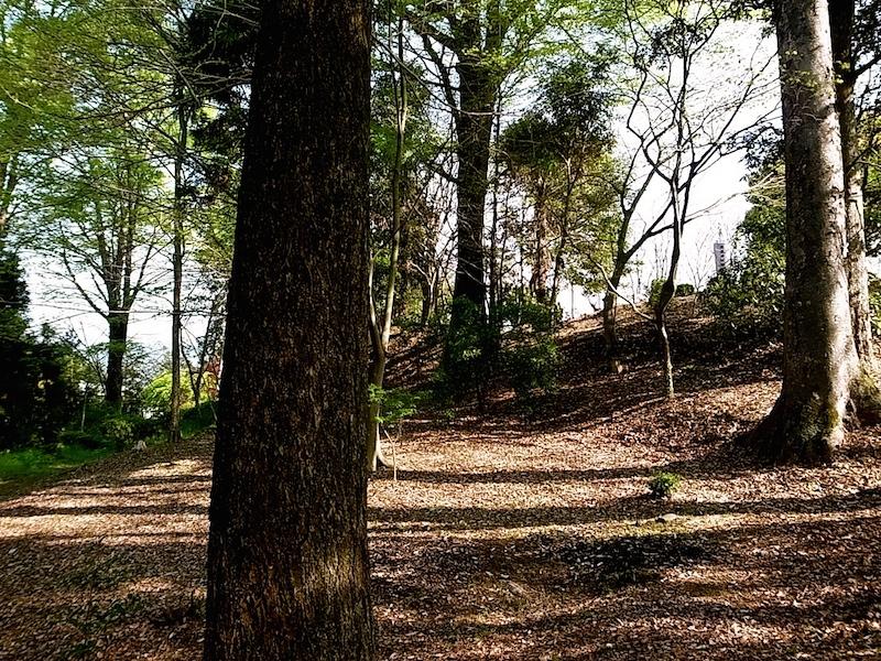 鎮守の森の大木。