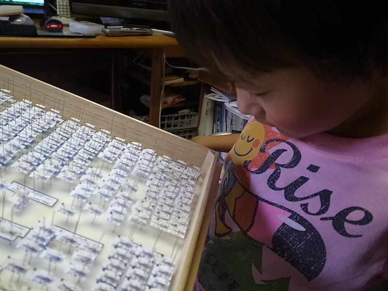 初の昆虫標本。