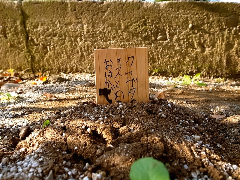 クワガタ墓標。